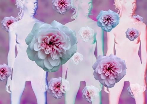 sommer-flower.jpg